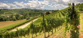 Вина Италии на подъеме, или Пьемонтская симфония