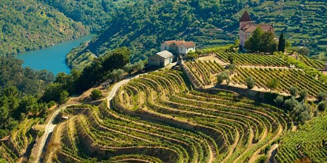 Португальские вина на любой вкус