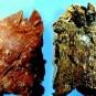 Слева легкие здорового человека, а справа курильщика
