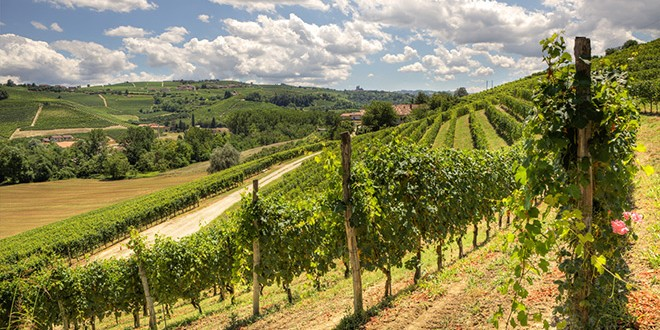 Itaalia veinid, või Piemonte sümfoonia