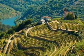 Portugali vein igale maitsele